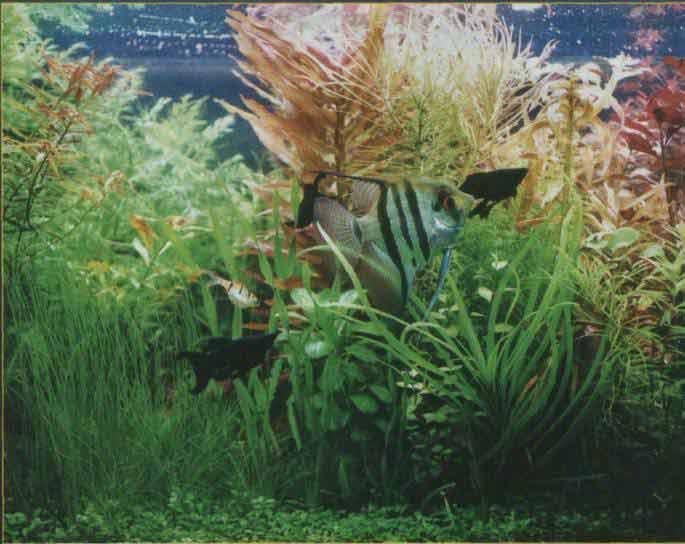 голландского аквариума.